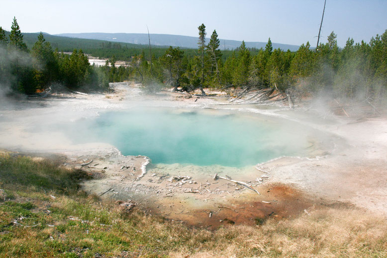 Yellowstone, Norris Geyser Basin - Back Basin