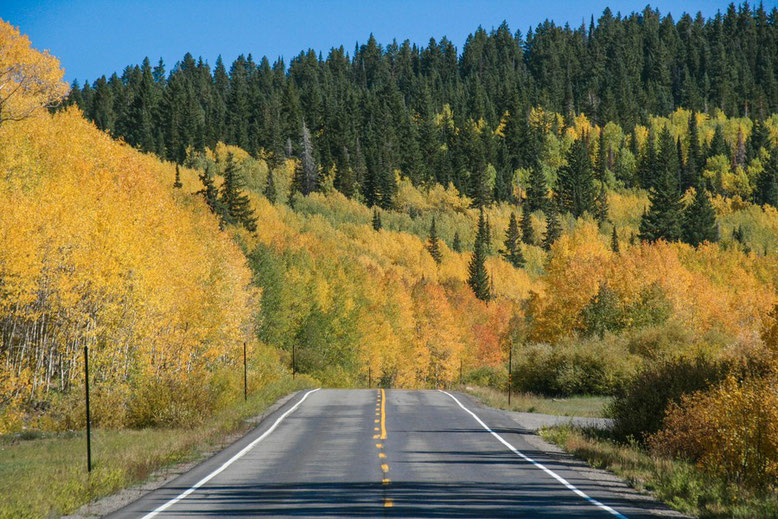 Scenic Byway Grand Mesa