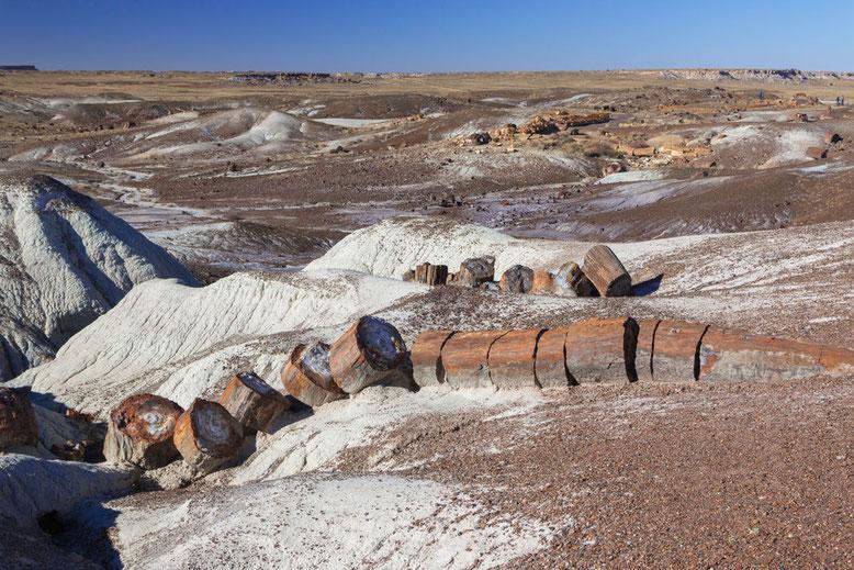 Great Basin Wüste. Petrified Forest