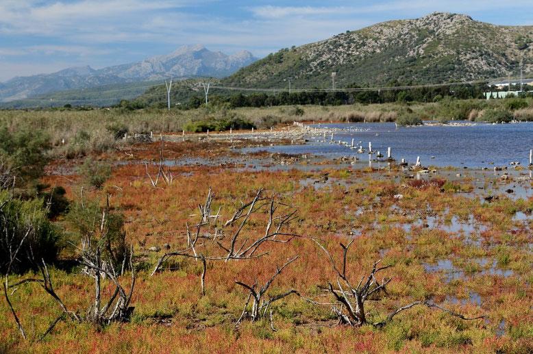 Naturpark S'Albufera de Mallorca