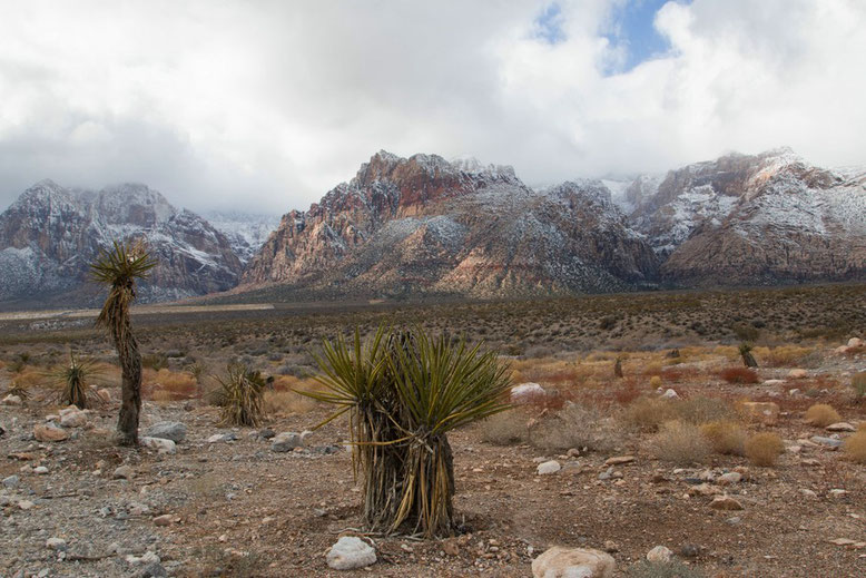 Mojave Wüste, Red Rock Canyon