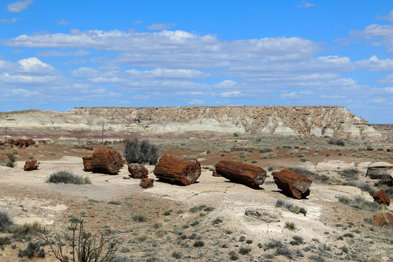 Petrified Forest - Painted Desert; Giant Logs Trail