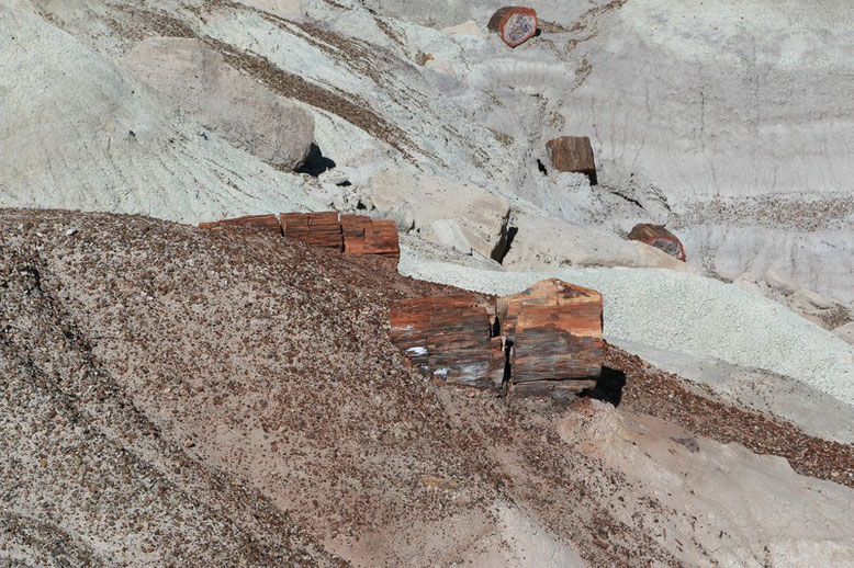 Petrified Forest - Painted Desert, The Changing World
