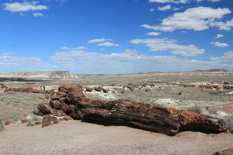 Petrified Forest - Painted Desert