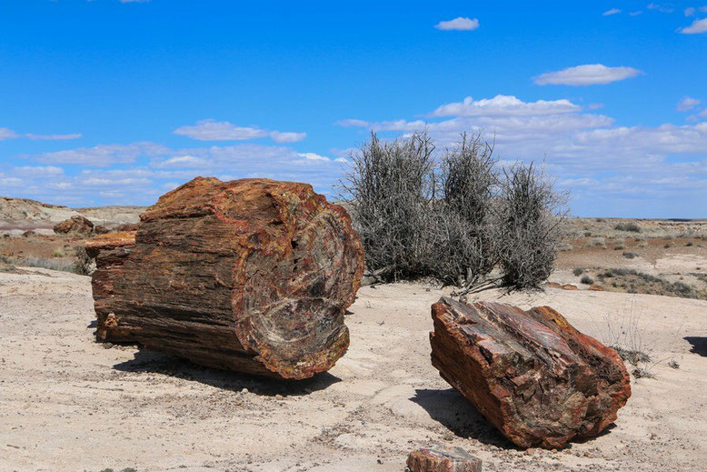 Petrified Forest - Painted Desert, Giant Logs Trail
