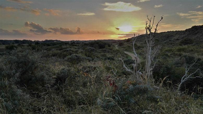 Renesse Dünenlandschaft
