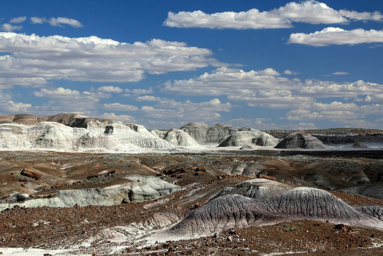 Petrified Forest - Painted Desert, The Crystal Forest