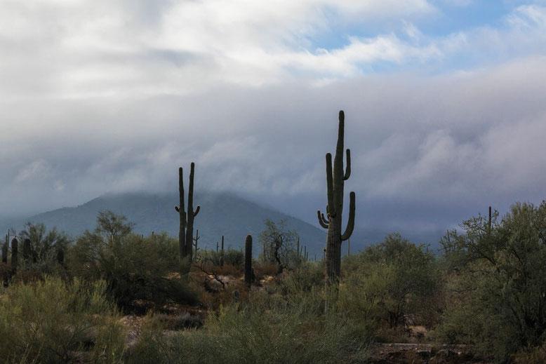 Auf der Fahrt zum Organ Pipe Cactus NM