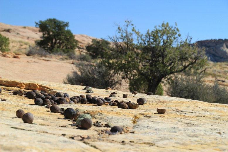 Moqui Marbles -  Moki Hill