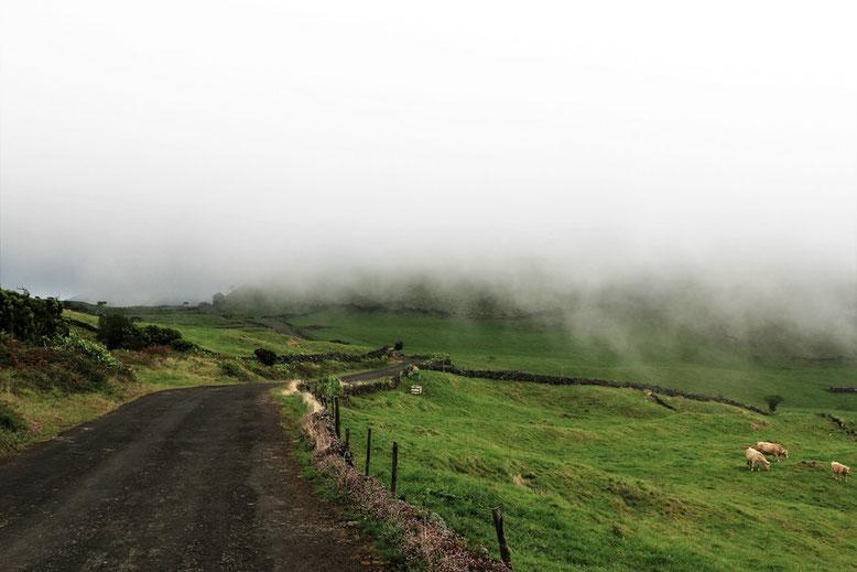 Pico im Nebel