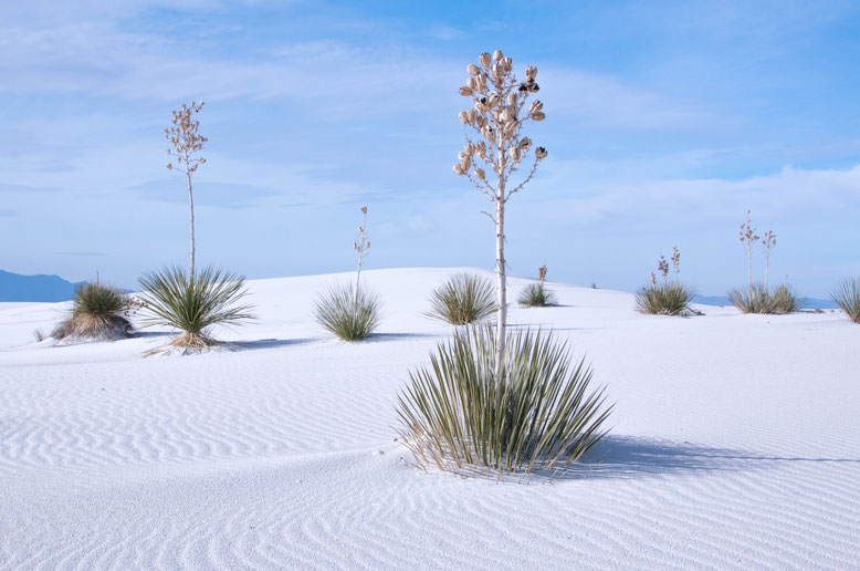 Wüste der USA