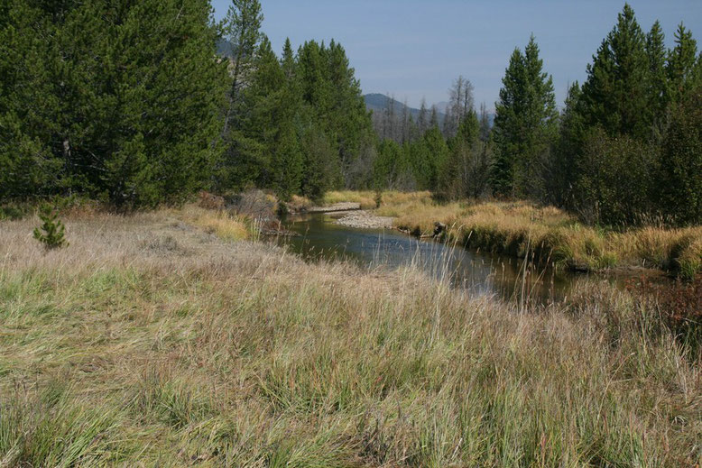 Colorado River im Kawuneeche Valley