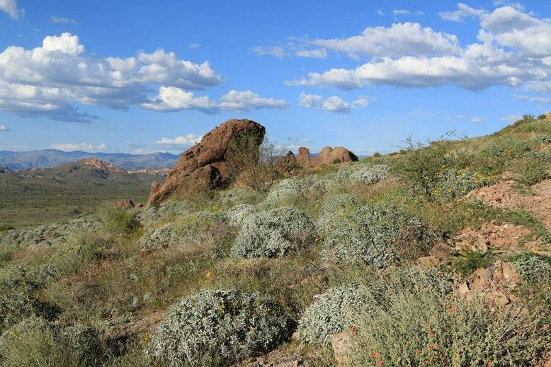 Lost Dutchman State Park
