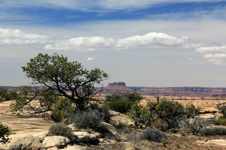 Canyonlands NP -  Slickrock Foot Trail