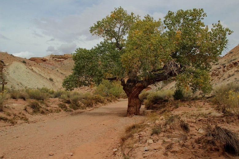 Little Wild Horse Canyon Trail