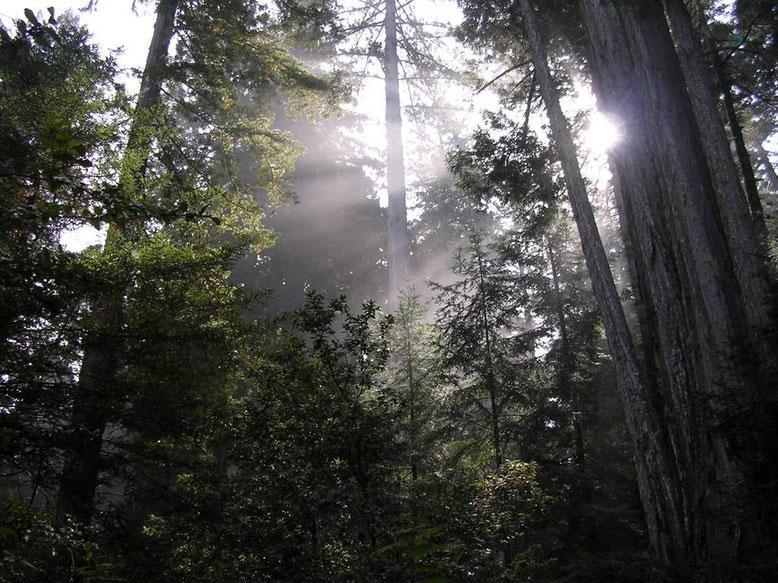 ...zauberhafte Märchenwälder