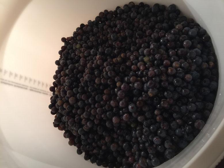 14kg rote Trauben fetig zum einmaischen