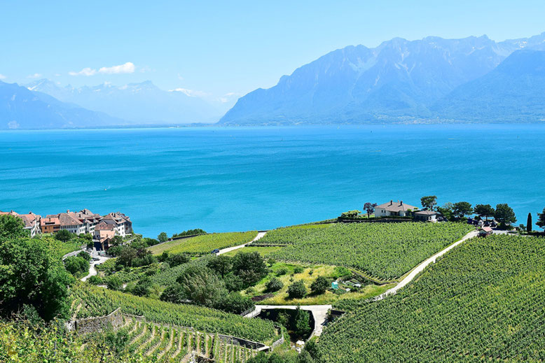 Switzerland Vacation Spots - Vineyards between Lausanne and Montreaux in the Vaud region