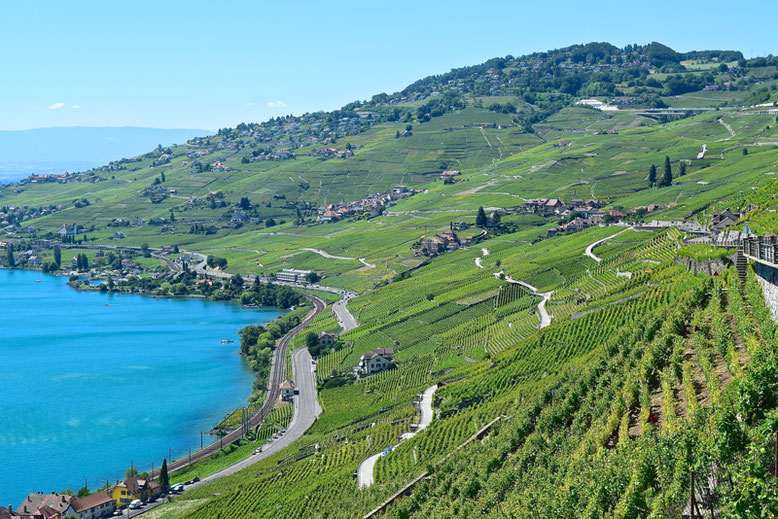 a-scenic-hike-through-the-vineyards-of-lavaux-switzerland.jpg