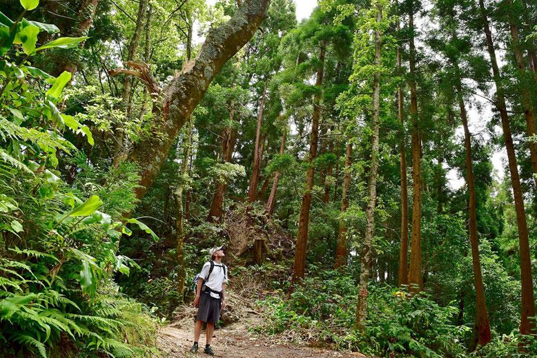 Visit Azores - The Lush Vegetation