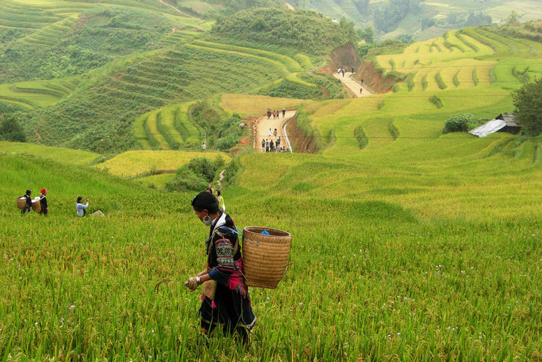 10 Scenic Hikes Around the World - Sapa, Vietnam
