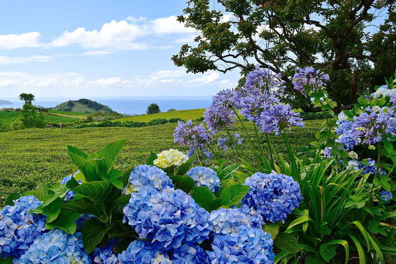 Visit the Azores - Beautiful Flowers