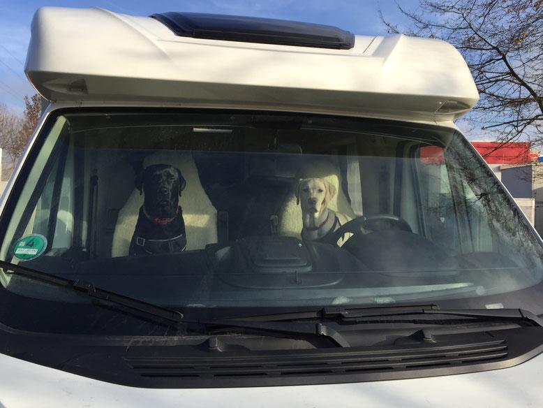 ....und ich sag noch Bailey fahr nicht so schnell da steht ein Blitzzzzz e r ......