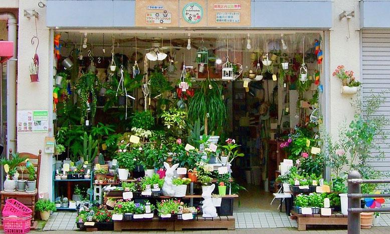 練馬桜台ガーデニングショップ かのはの 看板は只今製作途中ですが、只今の店頭は夏の植物と鳥たちがお出迎えしております。2018・6/26 練馬桜台ガーデニングショップ かのはの