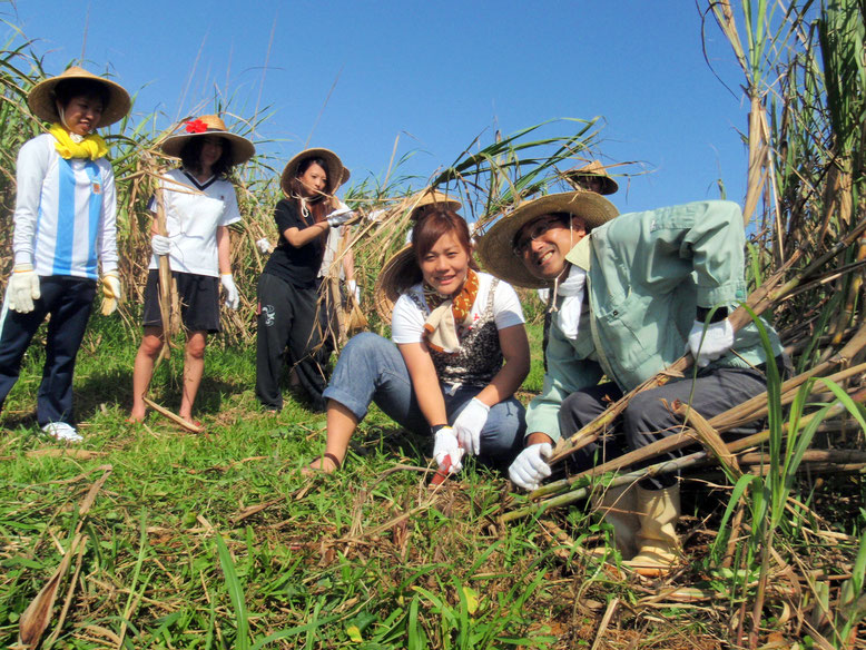 沖縄体験ニライカナイといえばサトウキビ刈りと黒糖作り!他にも内容充実のプログラムが盛りだくさん。