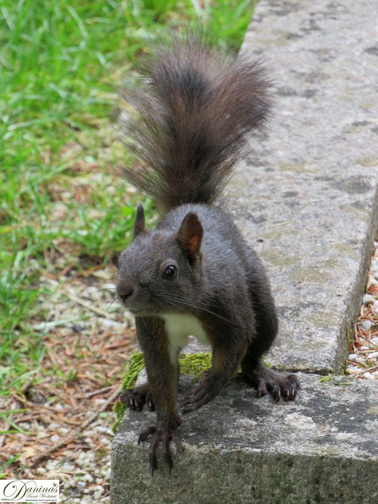 Stadt-Eichhörnchen sind schlau und wenig scheu.