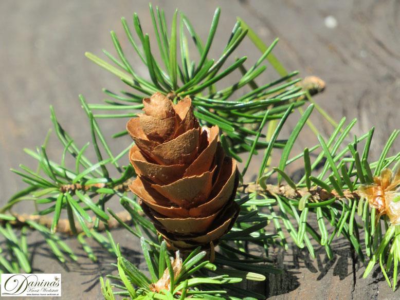 Nadelbäume und ihre Zapfen. Bäume liefern uns gute Luft (Sauerstoff), fördern unsere Gesundheit - und zudem tolles Bastelmaterial. Mehr auf www.daninas-kunst-werkstatt.at