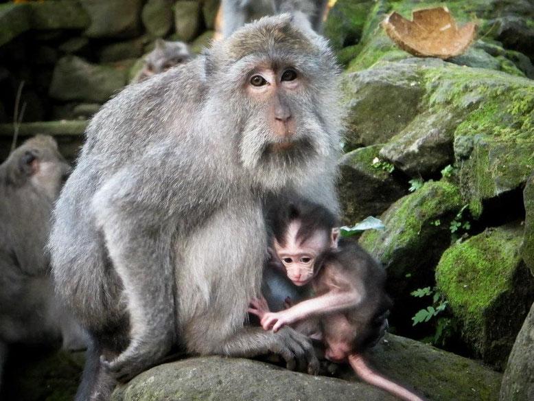 Viaggio di gruppo a Bali. Monkey Forest Ubud
