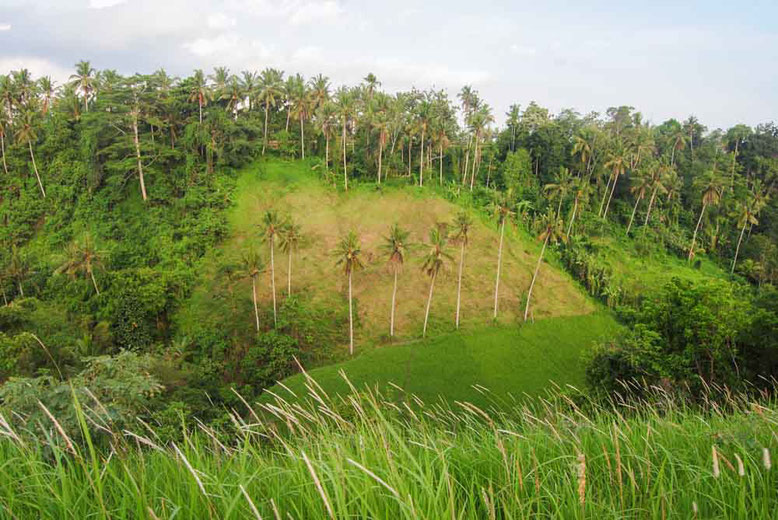 Ubud - Campuhan Ridge Walk