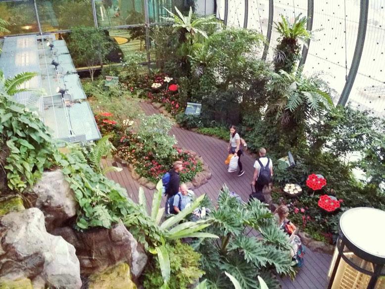 Aeroporto di Singapore: 6 cose da fare Gratis. Butterfly Garden