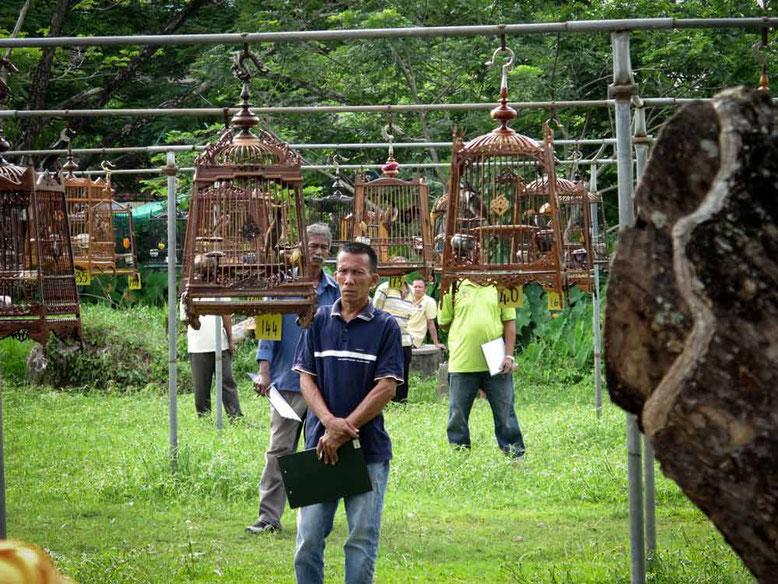 Kota Bharu. Gara di canto degli uccelli