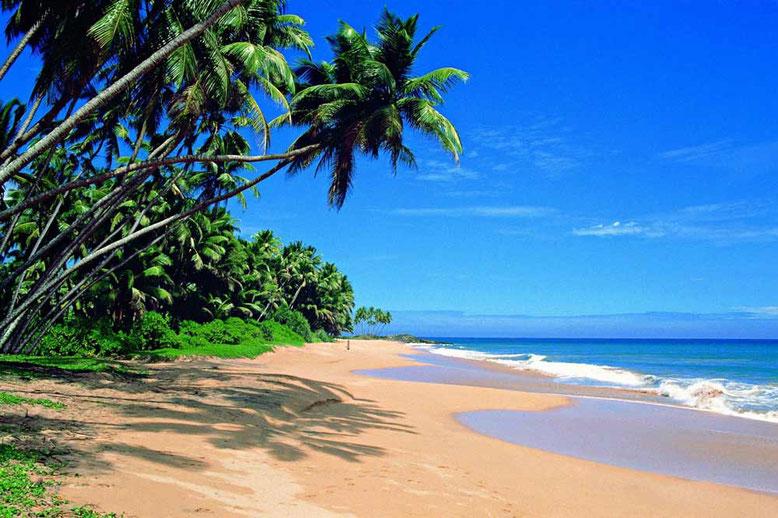 Viaggio di gruppo in Sri Lanka. Mirissa Beach