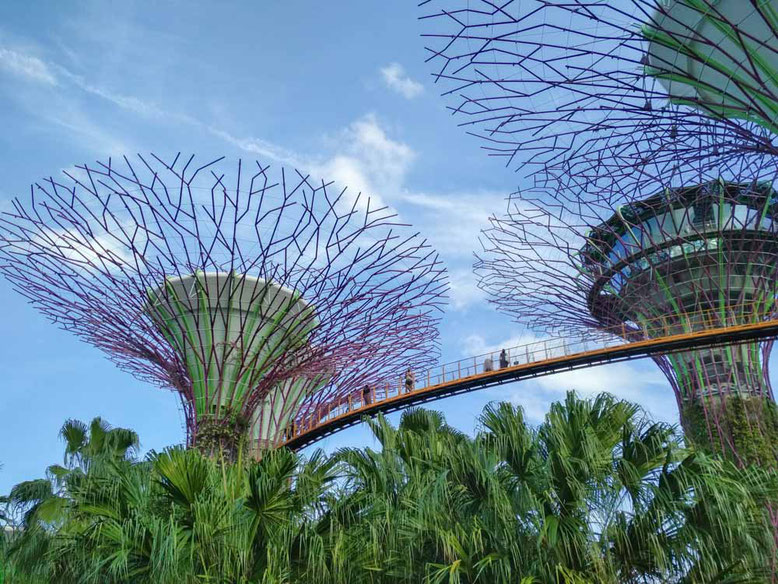 Singapore. Gardens by The Bay, Supertree Grove & OCBC Skyway
