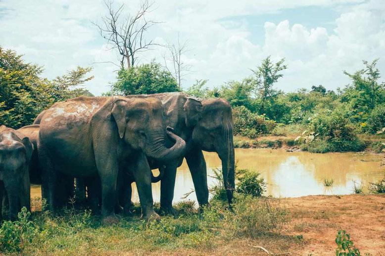 Pacchetto Vacanza in Sri Lanka. Safari con elefanti a Udawalawa National Park