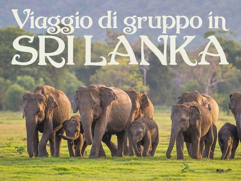 Viaggio di gruppo in Sri Lanka