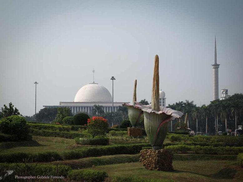 Uno scorcio di Merdeka Square a Jakarta (Photo by Gabriele Ferrando)