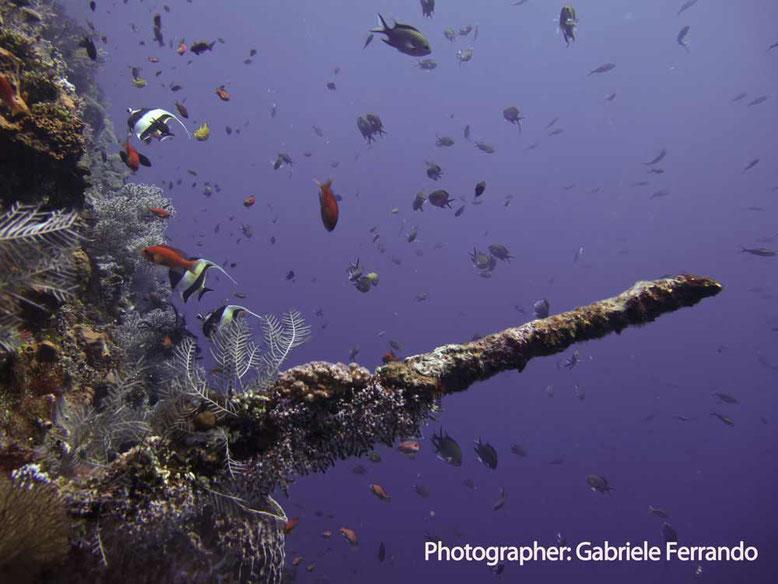 Parte del relitto Liberty Wreck a Tulamben - Bali