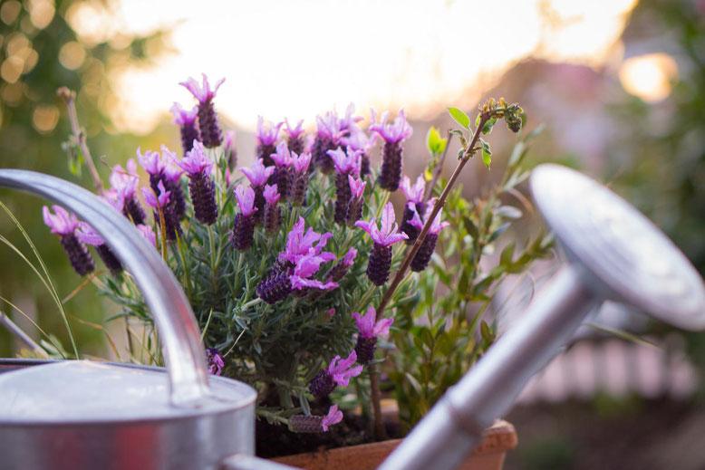 Gartenbewässerung automatissieren