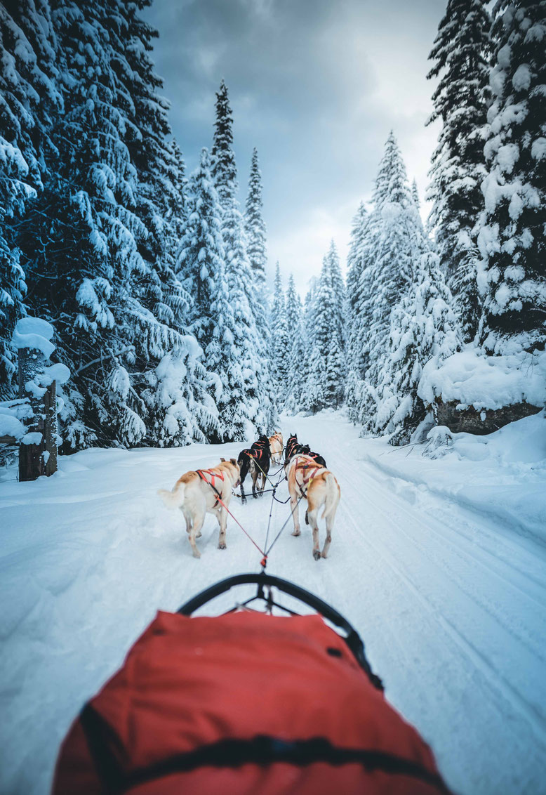 Canadian Rockies in Winter Dog Sledding Jasper
