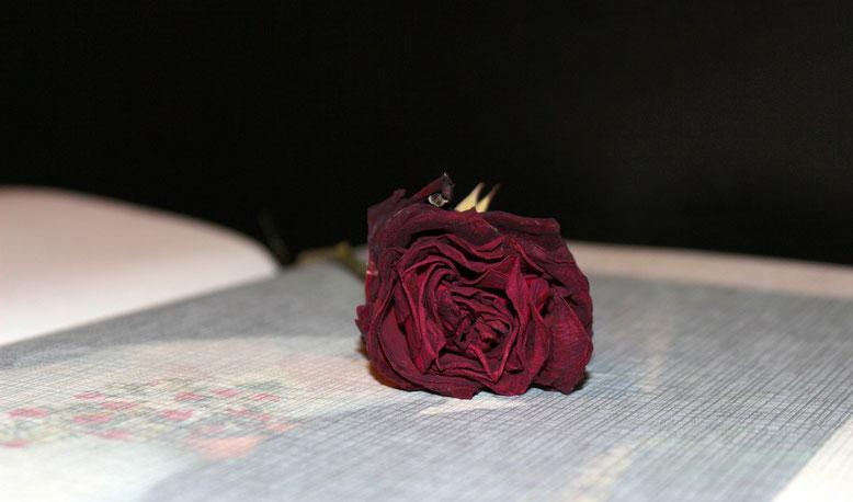 Kondolenzbuch  Bestattungslexikon, lexikon-bestattungen, Bestattungsdienste, Bestattungsbedarf Im Rahmen von Trauerfeiern oder Bestattungszeremonien werden von den nächsten Angehörigen ein Kondolenzbuch oder Kondolenzlisten ausgelegt