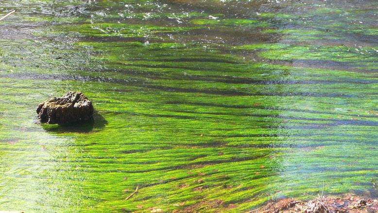 Flussbestattung Bestattungslexikon, lexikon-bestattungen, Bestattungsdienste, Bestattungsbedarf Naturbestattung Bestatter