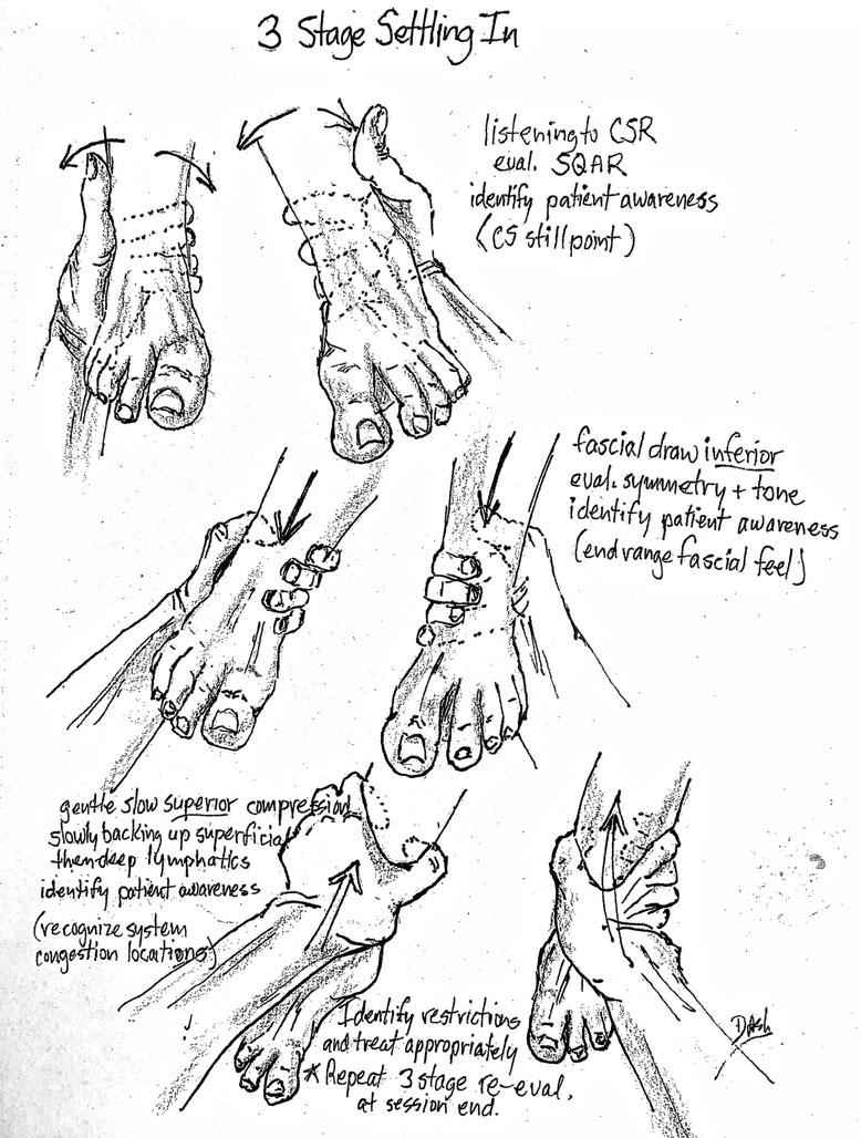 """3 Stage Settling In"" Illustration Copyright Don Ash"