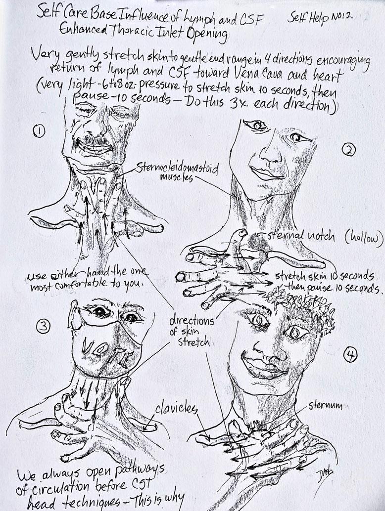 "Diagram ""Enhanced Thoracic Inlet Opening"" Illustration Copyright Don Ash"
