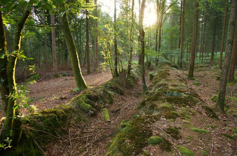 Ancienne lisière forestière, marqué par un fossé taluté.
