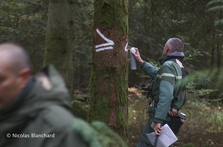 Elaboration des cloisonnements forestiers. Ces symboles indiquent au conducteur de l'abatteuse, les zones où il peut passer avec sa machine. Au delà, il peut mettre en péril un site archéologique existant.