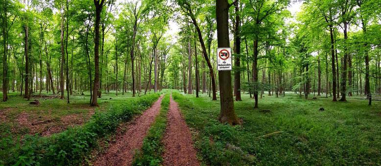 """In Wäldern hat meiner Meinung nach gar kein Kfz """"etwas zu suchen""""!"""